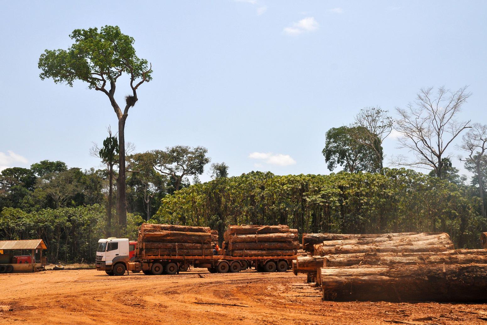 Logging activities in the Brazilian rainforest